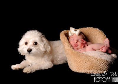 baby fotografie Waregem