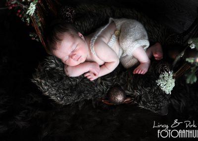 fotografie newborn Meulebeke kerst