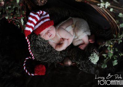 fotografie newborn Zulte kerst